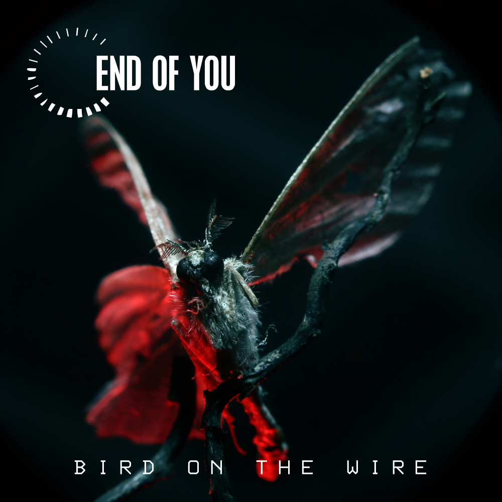 End of You - Bird on the Wire - Single cover
